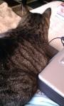 Sami J - YTAA Office Assistant Cat